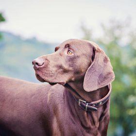 Hundefotografie und Tierfotografie in Hattingen, Witten, Bochum, Essen