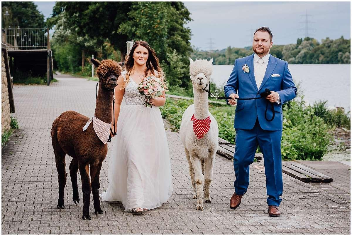 Hochzeitsfotograf Bochum Sommerhochzeit Corona draussen freie Trauung Kemnader See Seeblick Bochum Brautpaarshooting Alpakas Alpakashooting